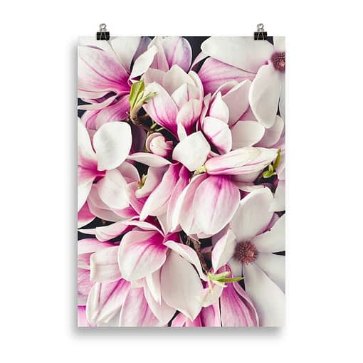 Wandbild Blüten des Magnolien Baums