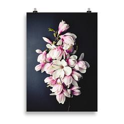 Wandbild Magnolien-Blüten
